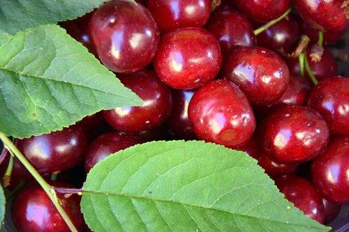 cherries  fruit  summer