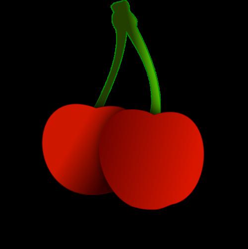 cherry fruit vector image