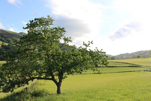 cherry itxassou basque country