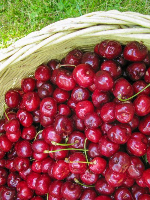 cherry summer fruit