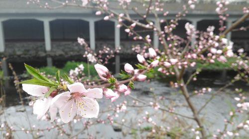 cherry blossom affix flowers