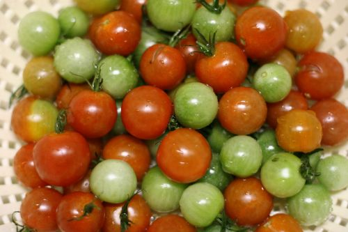 cherry tomatoes green red
