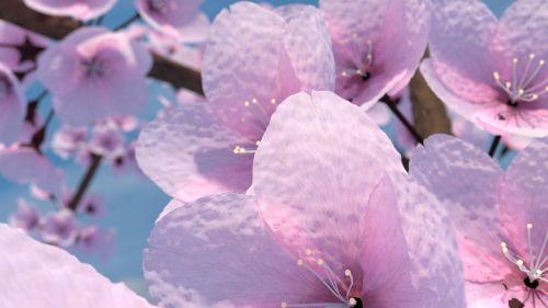 cherry tree blender 3d