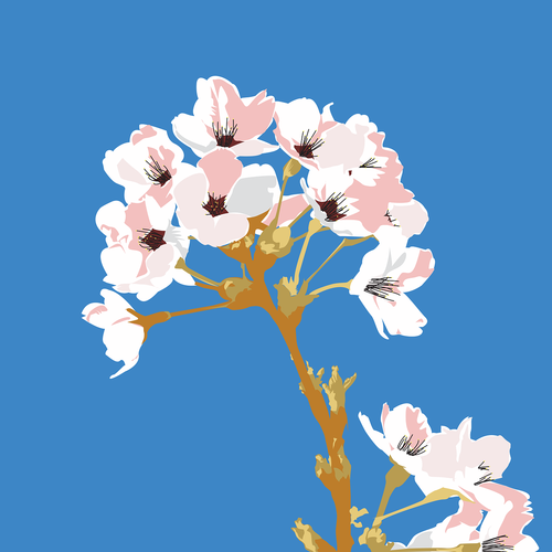 cherry tree  flower  twig