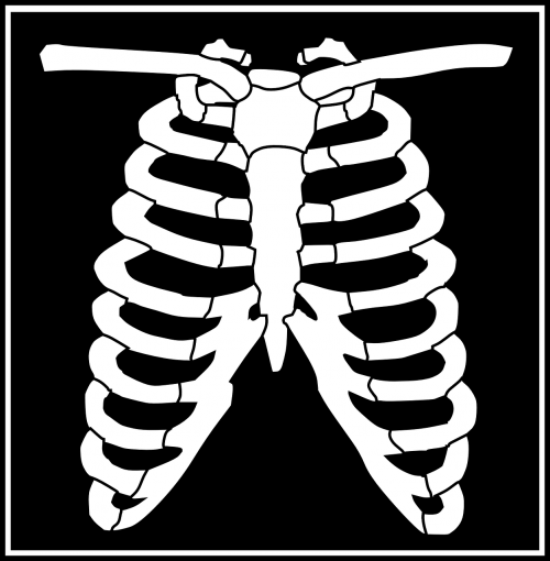 chest ribcage black