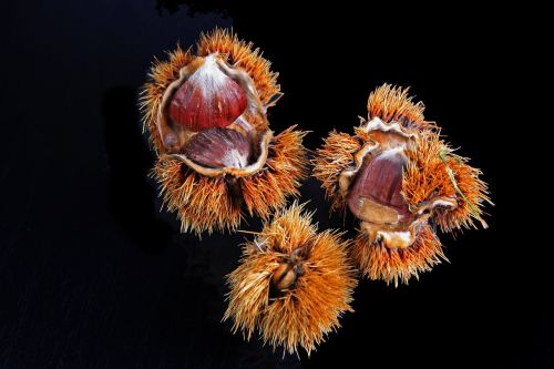 chestnut spur housing