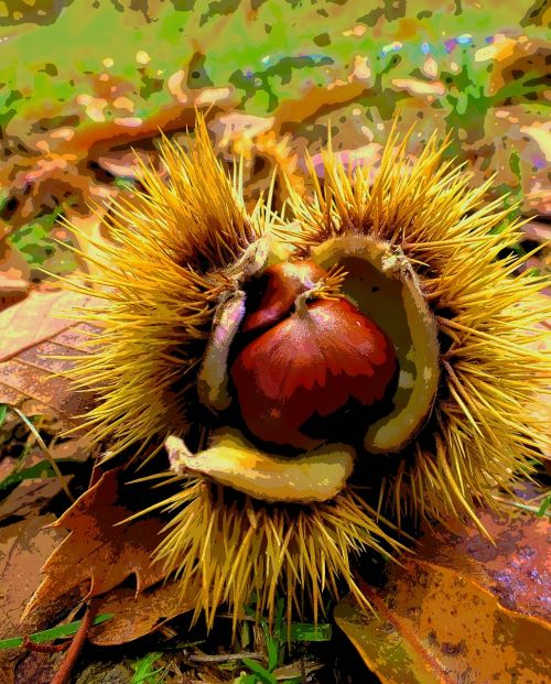 chestnut autumn color