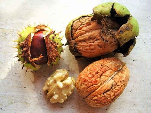 chestnut walnuts in the bowl