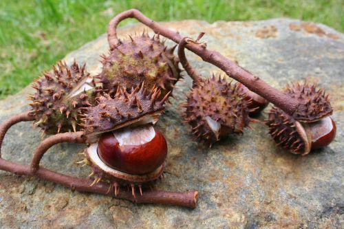 chestnut chestnut branch chestnut tree