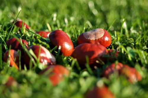 chestnut brown autumn