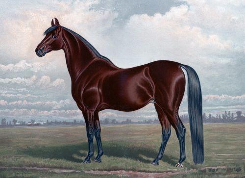 Chestnut Horse Painting (2)