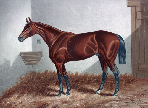 Chestnut Horse Painting