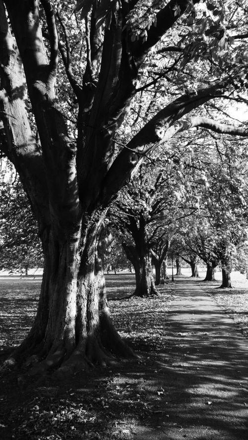 kaštonas, medžiai, medis, kelias, kelias, kelias, parkas, kaštainiai