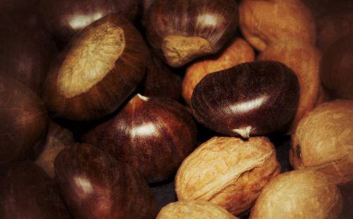 chestnuts walnuts november