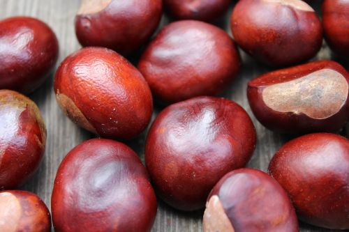 chestnuts autumn the fruits of horse chestnut