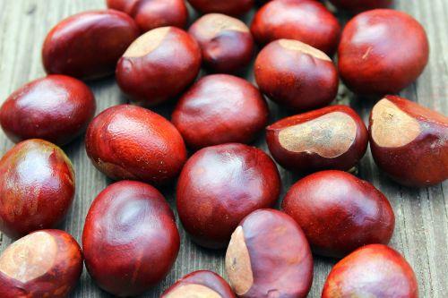 chestnuts fall autumn
