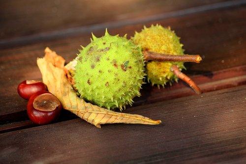 chestnuts  autumn  september