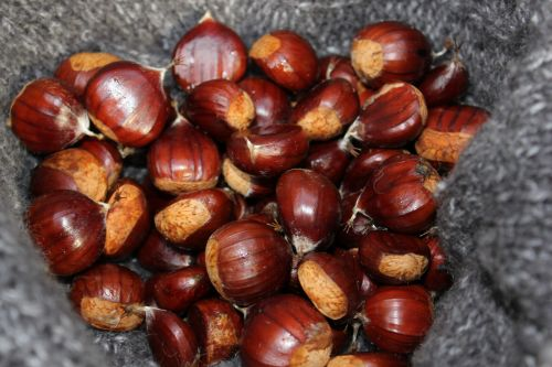 Chestnuts Gathered In Woods