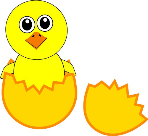 chick hatching egg