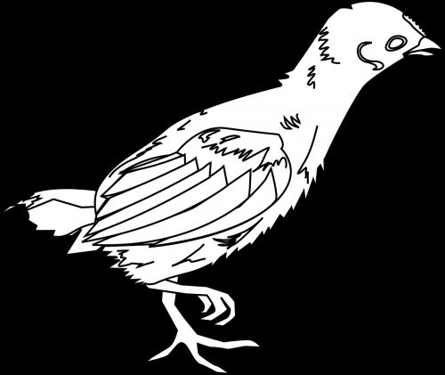chick chicken little chicken