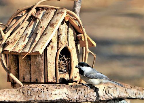 Chickadee And Bird House