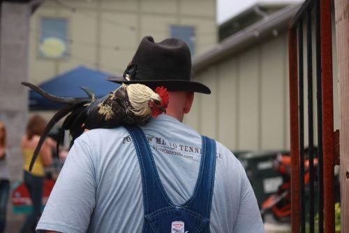 chicken pet hat