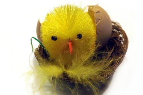 chicken eggshell basket
