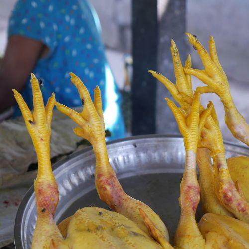 chicken claw chicken boiling fowl