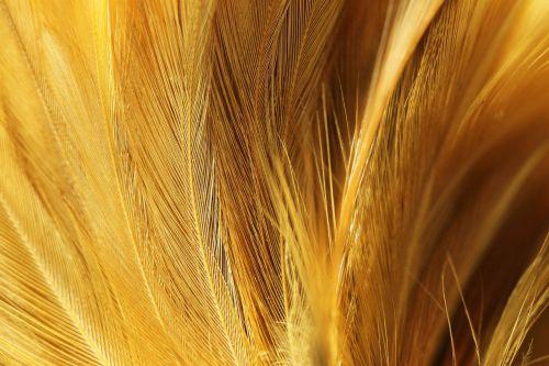 chicken feather velvety brown