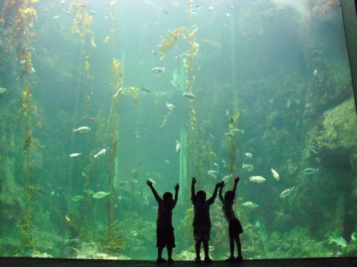 child aquarium water