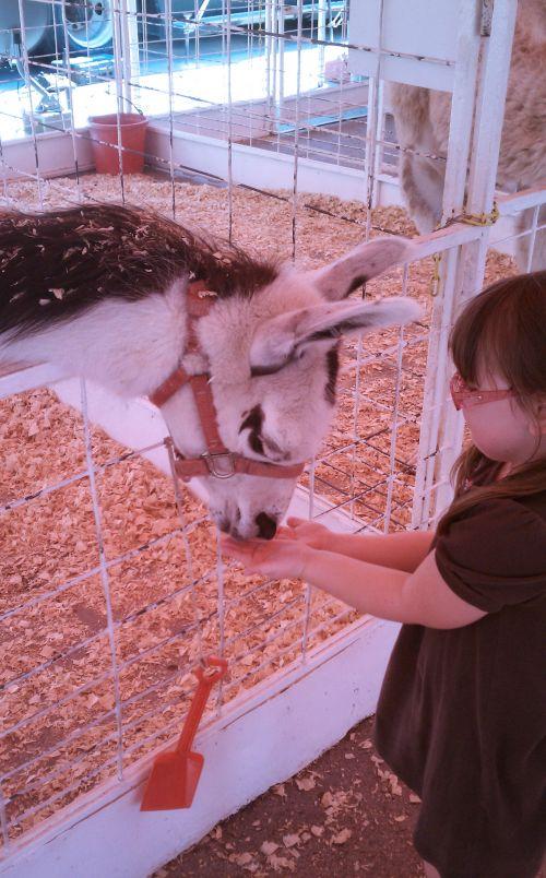 Child Feeding Llama