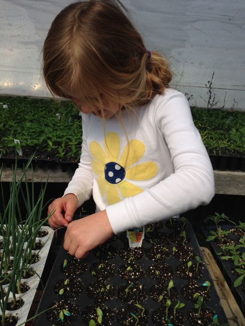 child planting seeds starting plants
