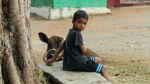 child with calf india is
