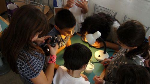 children they investigate microscope