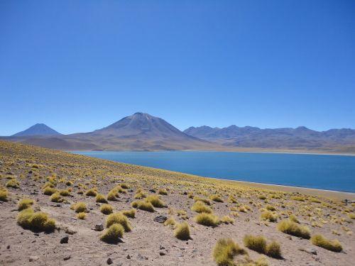 chile desert steppe