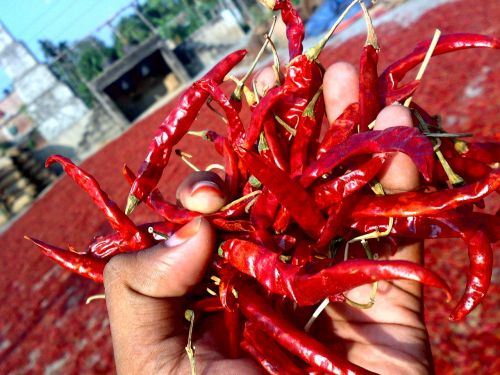 chili red-chili dry chili