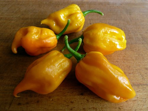 chili  habanero  spicy