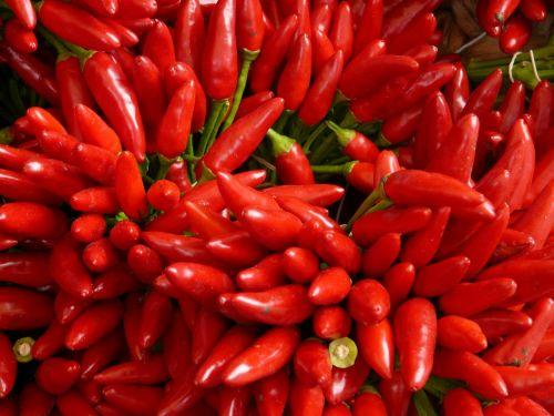 chili sharp red