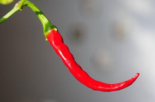 chili peppers chili pod