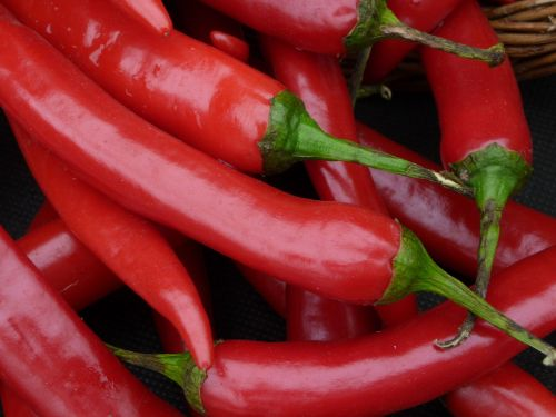 chilli peppers red chilli