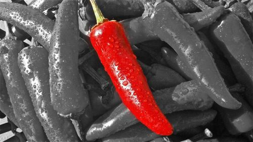 chilli pepper heat