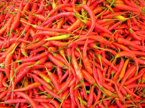 chilli pepper sharp spices
