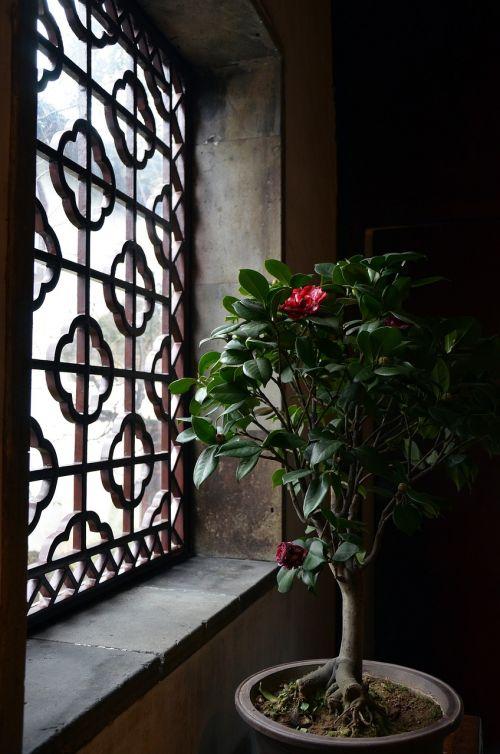 china garden bonsai