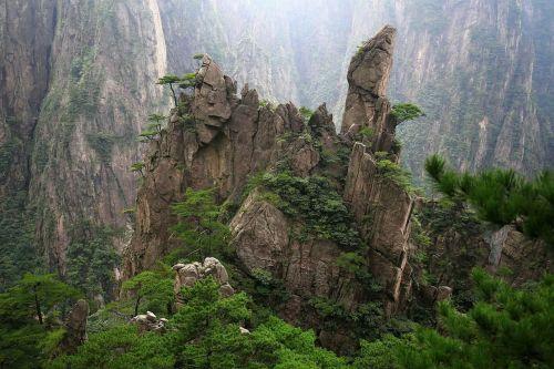 china huangshan cypress
