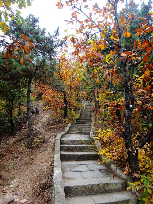 china stairs autumn