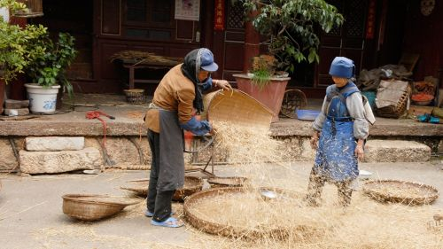 china agriculture harvest