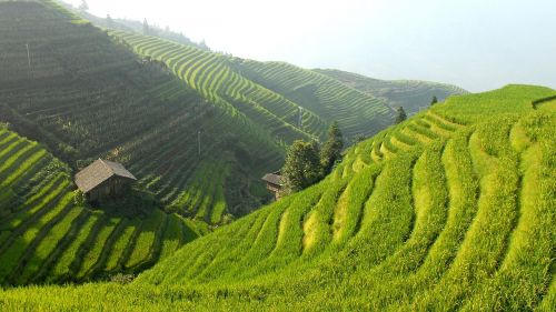 china rice terraces landscape