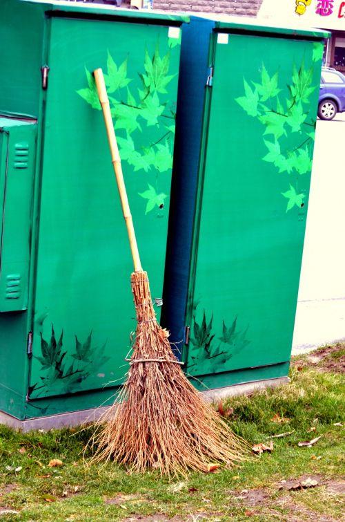 Chinese Broom