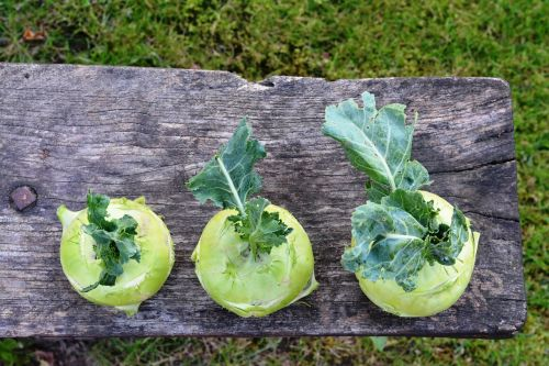 chinese cabbage ' kohlrabi kalarepka green