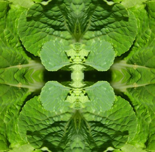 Chinese Cabbage Leaf Abstract